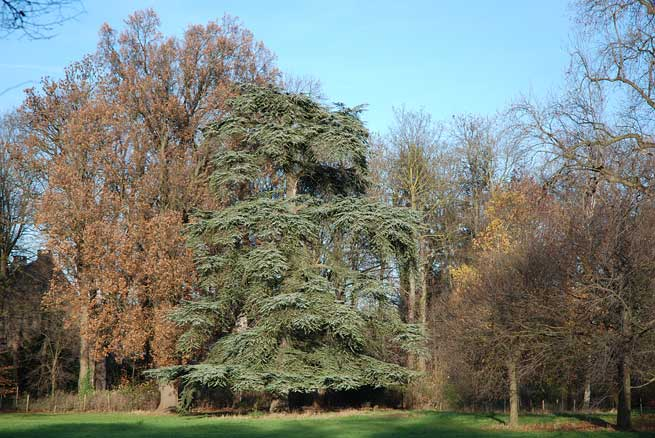 bomen kasteeltuin eijsden